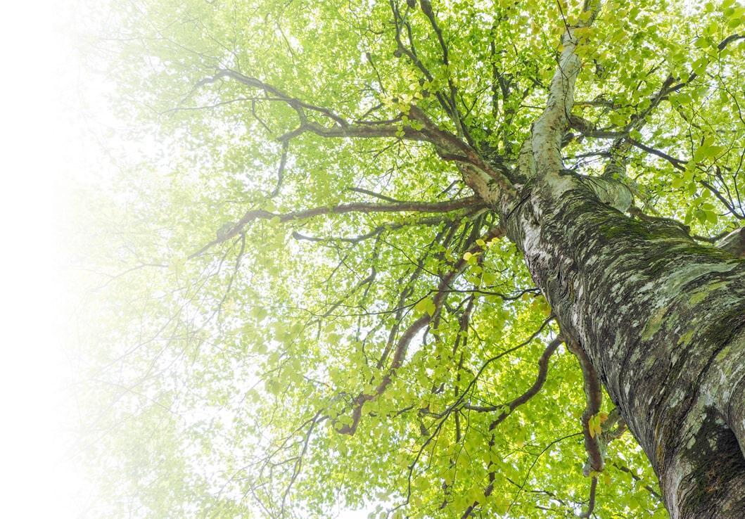 Large Tree upclose